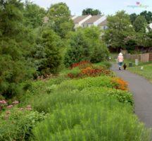 Asburn Village Pollinator gardens
