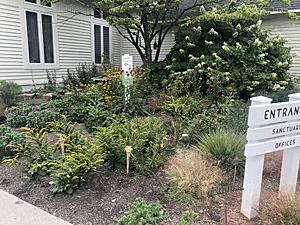 Native plant garden at church